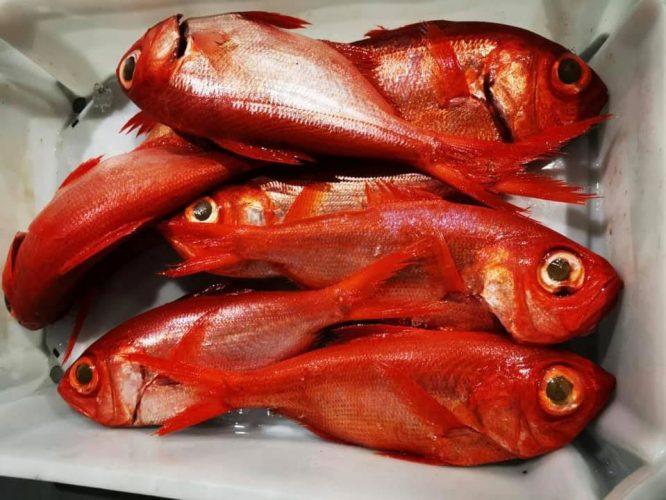Pesca-Restinga-Cofradia-de-Pescadores-El-Hierro-Islas-Canarias-Alfonsiños-01
