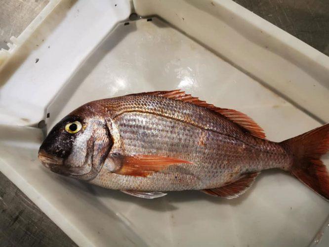 Pesca-Restinga-Cofradia-de-Pescadores-El-Hierro-Islas-Canarias-Bocinegro-01