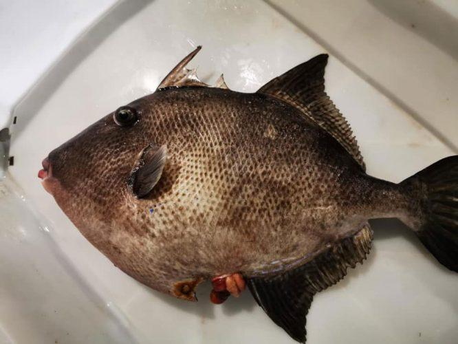 Pesca-Restinga-Cofradia-de-Pescadores-El-Hierro-Islas-Canarias-Gallo-01