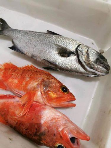 Pesca-Restinga-Cofradia-de-Pescadores-El-Hierro-Islas-Canarias-Lirio-Volon-Bocanegra-01