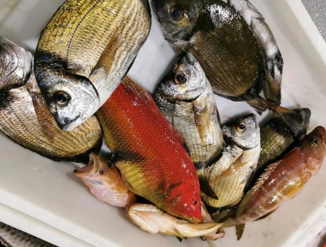 Pesca-Restinga-Cofradia-de-Pescadores-El-Hierro-Islas-Canarias-Saifia-Pejeperro-Cabrillas-01