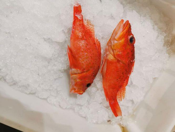 Pesca-Restinga-Cofradia-de-Pescadores-El-Hierro-Islas-Canarias-Volon-01